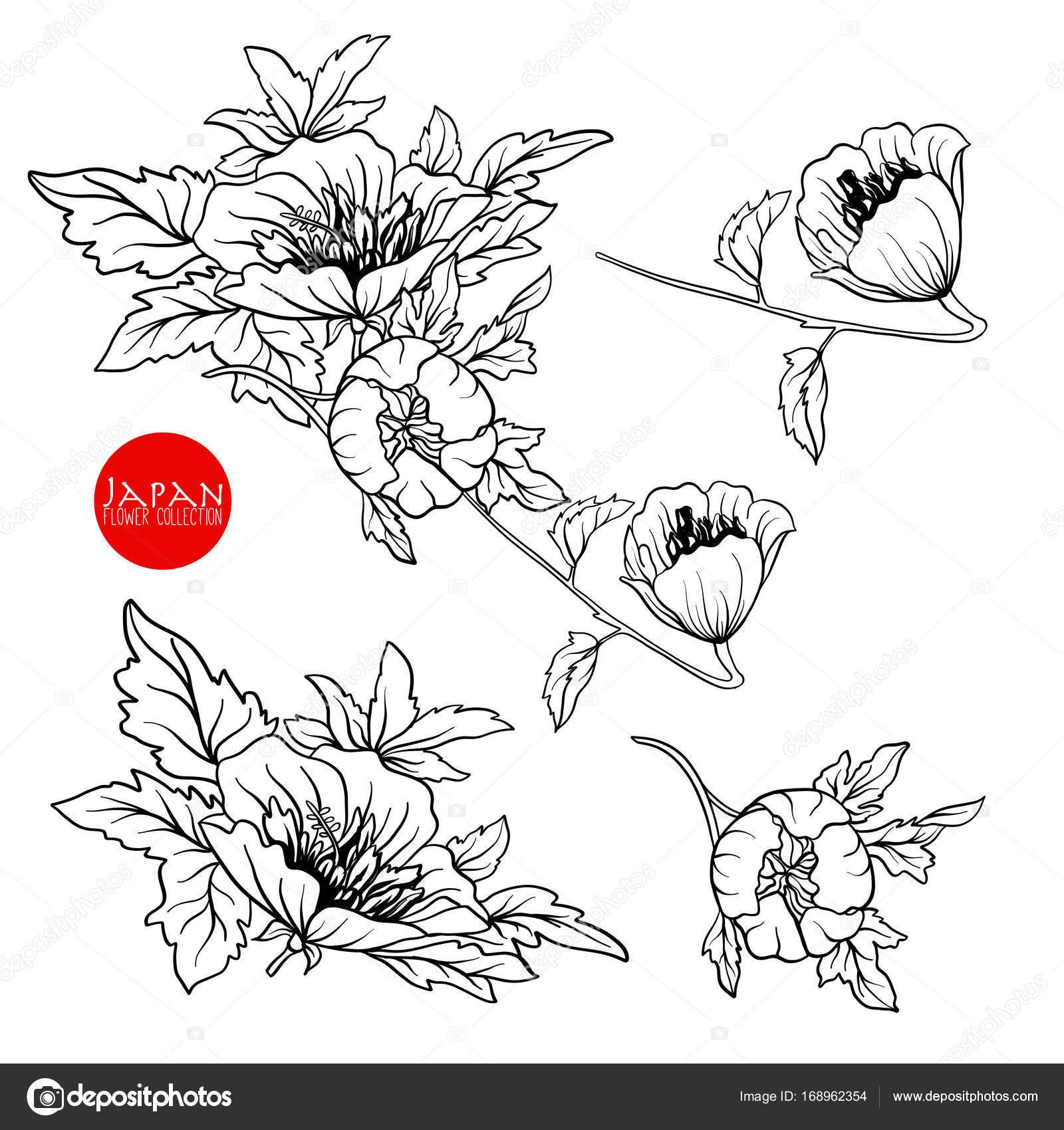 Blüten am Zweig. Lager Linie Vektor Illustration botanischen Blume ...