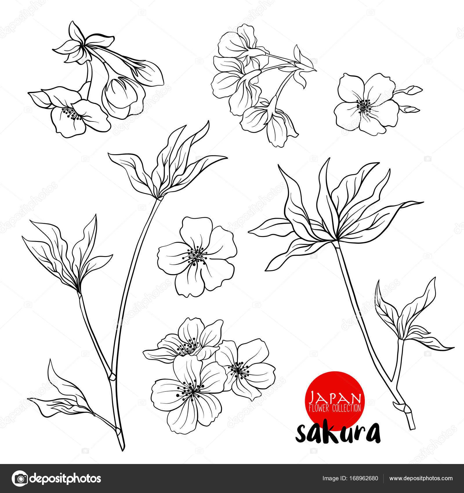 Rama De Cerezos En Flor Cerezo Japon Línea Stock Vector Il