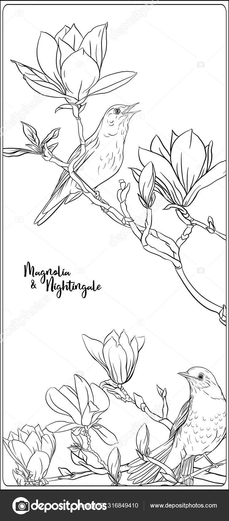 Magnolia Tree Branch Flowers Nightingale Coloring Stock Vector ... | 1700x747