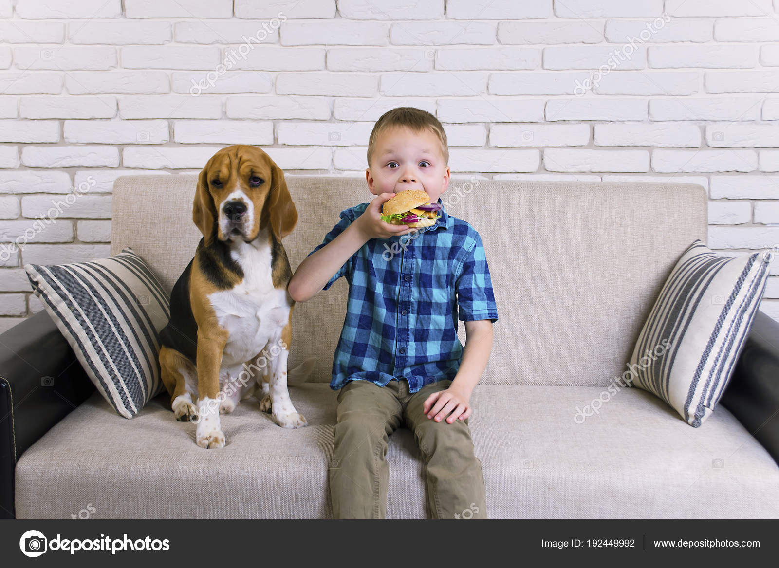 beagle kaufen hamburg