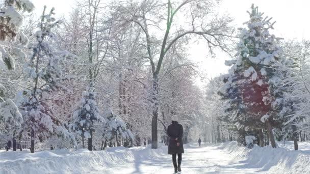 Winter Park stromy sněžení lidem slunce 4k