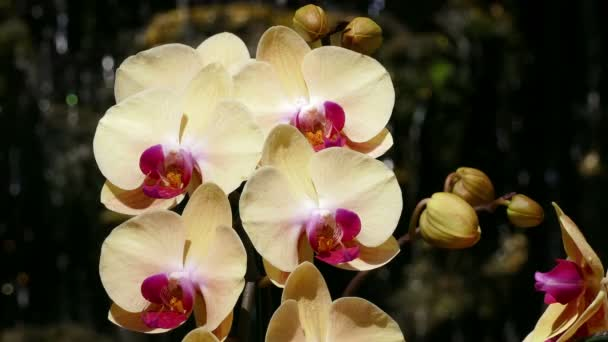 Orchids Flowers Falling Water Background 4k