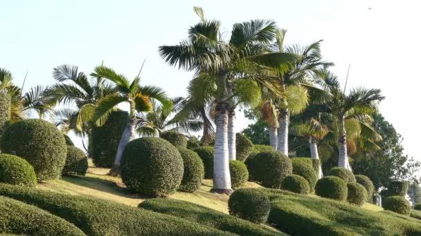Zahradní formy stromy palmy tropické 4k