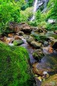 Flusso in giungla tropicale