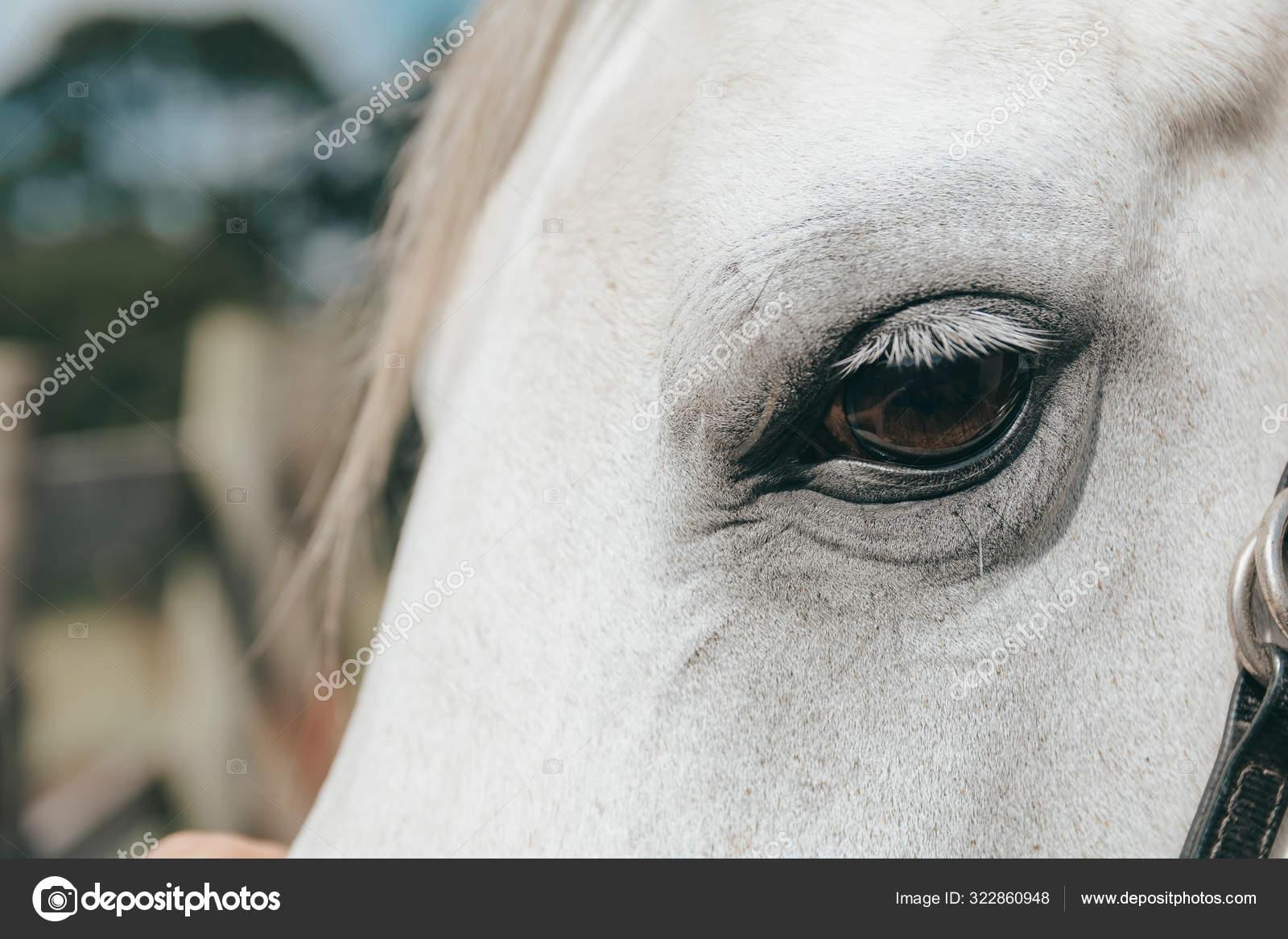 Eye Of A White Horse Stock Photo C Adrirodri Gar 322860948
