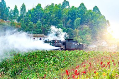 Steam narrow-gauge train.