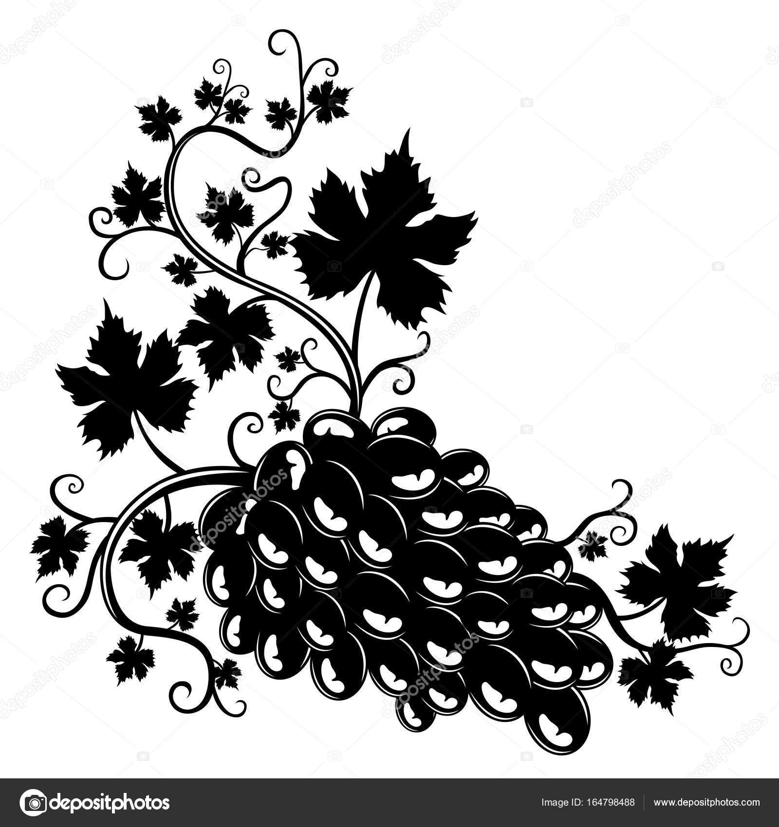üzüm Salkımı Stok Vektör Taronin 164798488