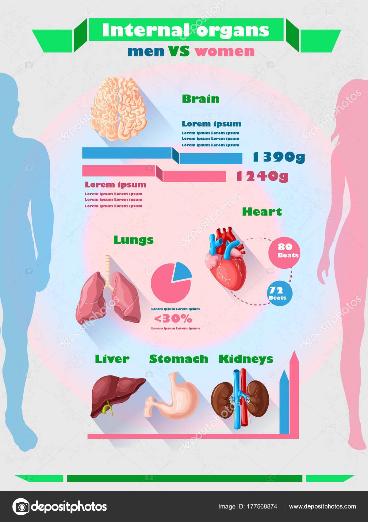 Menschliche Organe Infografik Vorlage — Stockvektor © Mogil #177568874