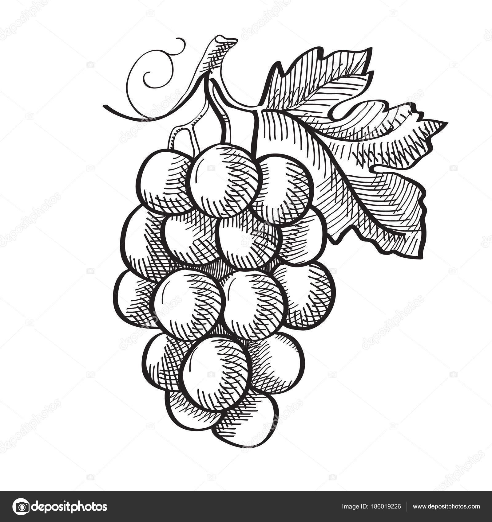 engraving fresh fruit template stock vector mogil 186019226