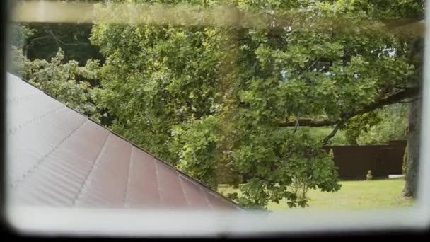 Pohled z podkrovního okna na velké staré silné zelené dubové větve