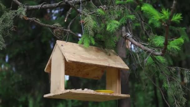 Futterhäuschen hängt an Ästen im Sommer Wald