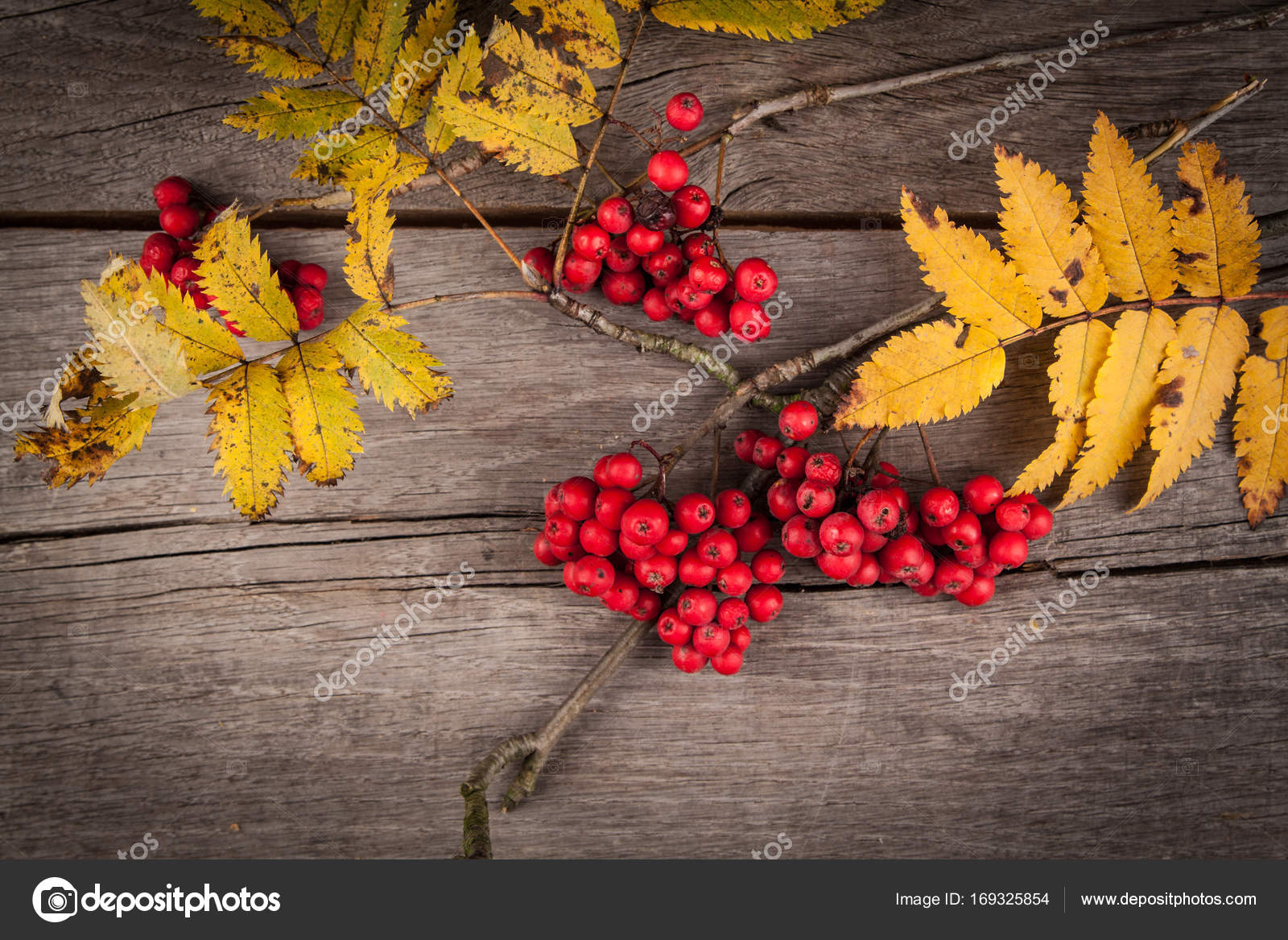im Herbst färben und Kran Frucht. Sorbus aucuparia — Stockfoto ...