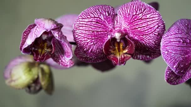 Orchidej kvete kymácející a flash světelné odrazy, na které se hraje na plátky