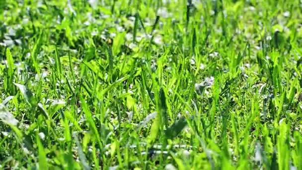 zelenou travou kymácí ve větru