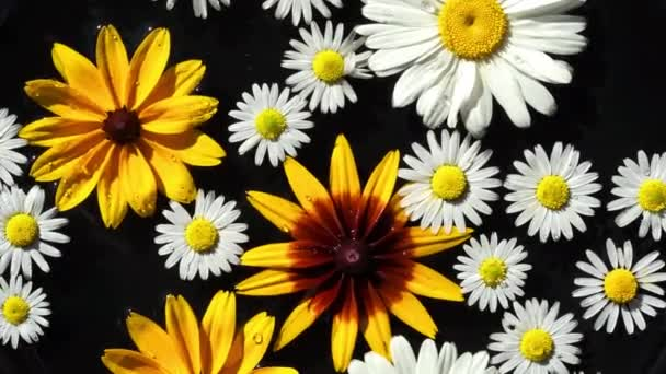 White and yellow garden flowers chamomilies and rudbeckia float on the black surface of the water as a background