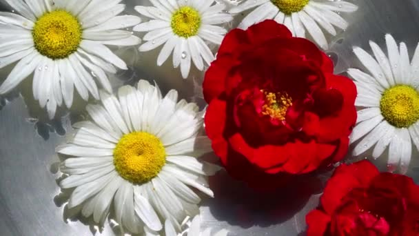red rose and chamomile flowers floating in a water, top view