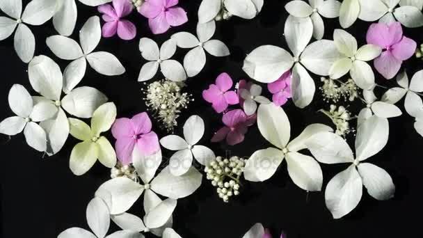 pohled shora mokré bílé a růžové hortenzie květy plavou na povrchu pozadí černá voda