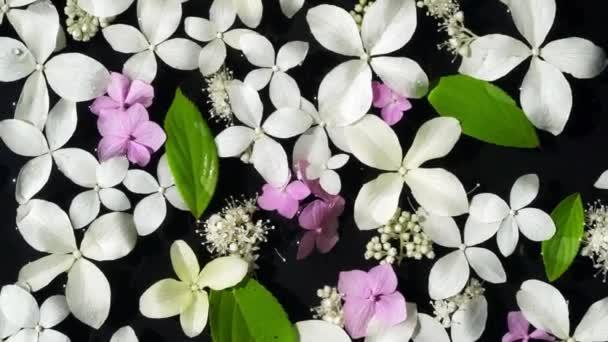 pohled shora mokré bílé a růžové hortenzie květiny a zelené listy plovoucí na povrchu pozadí černá voda