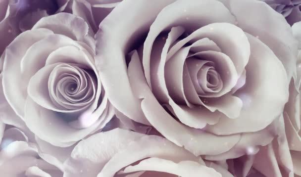 Růže romantické jiskry a bokeh