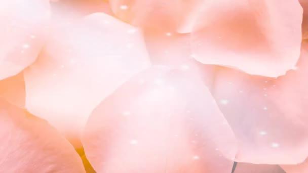 Floral rose petals clean background