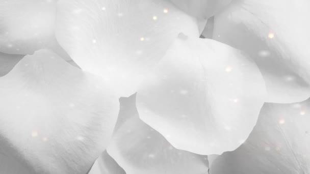 Květinové lístky růží čisté pozadí