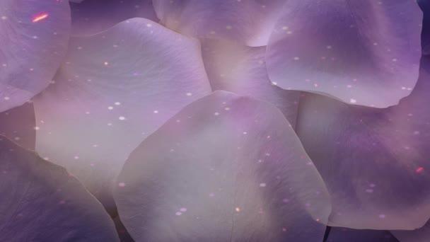 Beautiful rose petals background