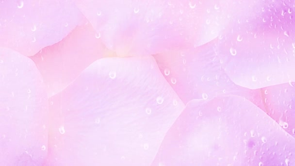 Pink rose petals shiny background
