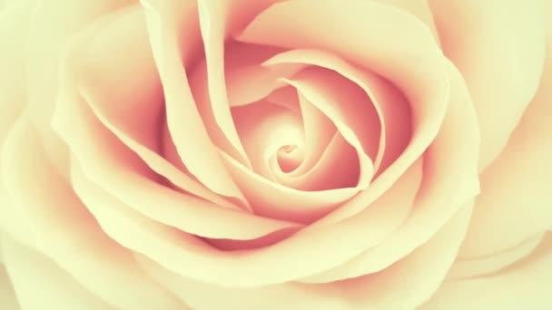 Pink romantic rose close up
