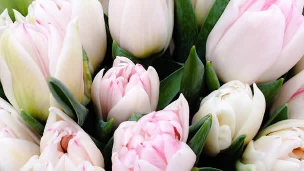 Színes tulipánok tavasz tulipán csomó