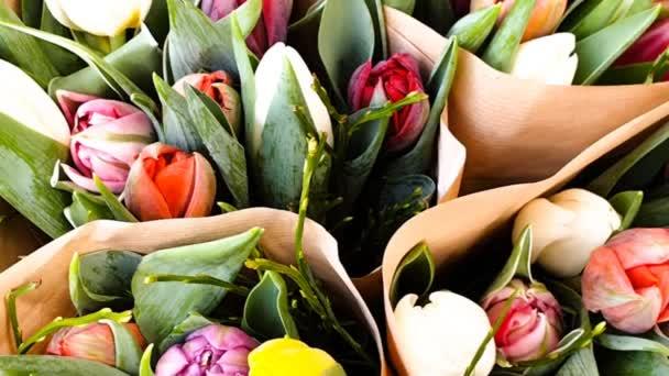 Barevné tulipány jarní tulipány