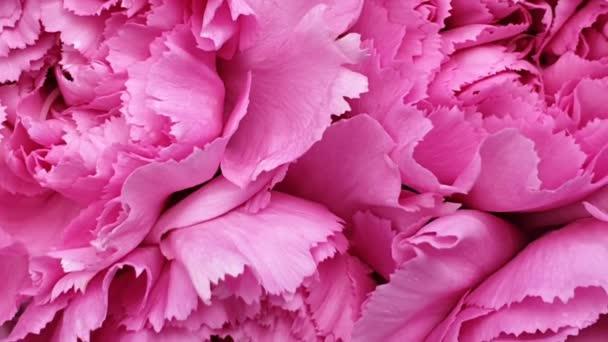 Virágdísz virágok háttér