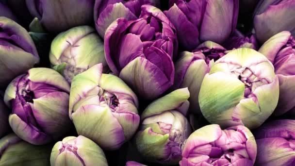 Jarní tulipány květinové tulipány