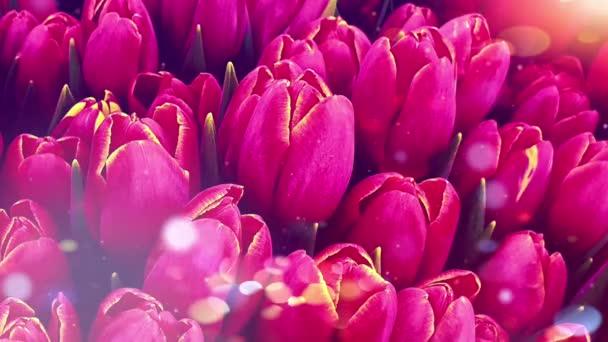 Červené tulipány bokeh květiny světla