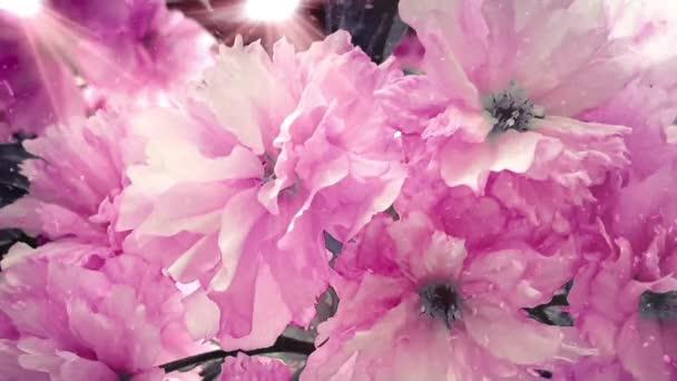 Gyönyörű virágok rózsaszín virág bokeh fények