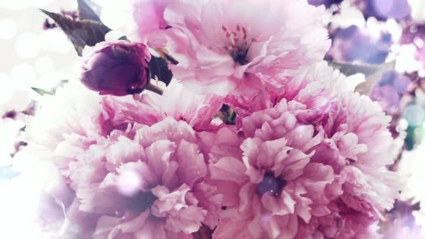 Beautiful flowers pink blossom bokeh lights