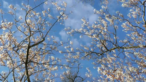 spring tree branches with blossoms