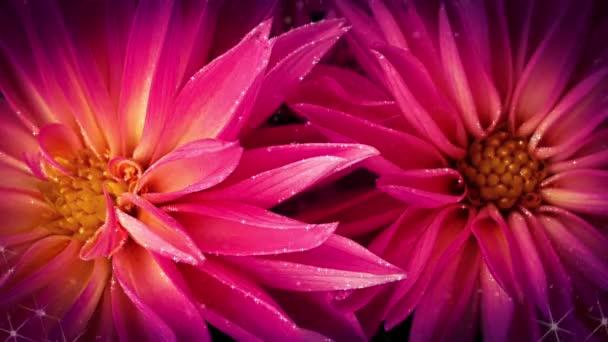 Krásná růžová květina úžasné květiny