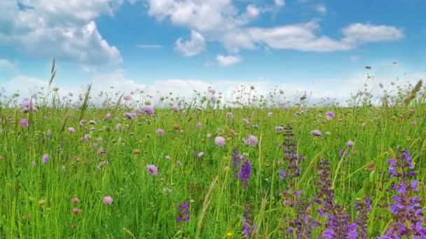 Virágok Meadow táj fű és vadvirágok felhős ég