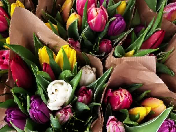 Spring tulips floral tulip summer