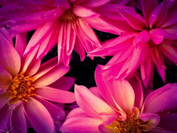 Gyönyörű rózsaszín virág csodálatos virágok