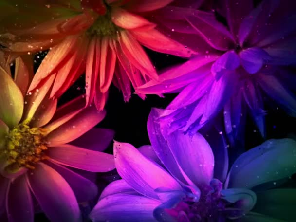 Pink exotic flower on black background