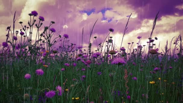 Flowers Meadow landscape with grass and wildflowers cloudy sky
