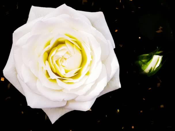 Rózsa virágok gyönyörű rózsa virág fej