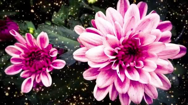 květiny růžové krásné květy