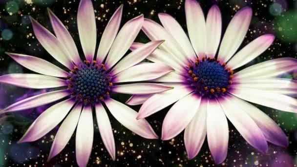 Bílá květina chryzantéma krásné květiny