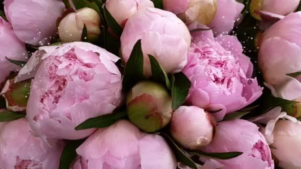 Růžové květy pivoňky růže