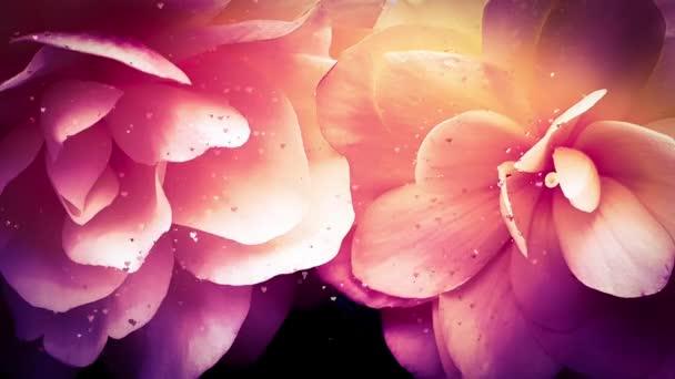 květiny krásná květina hlava výbuch srdce animace