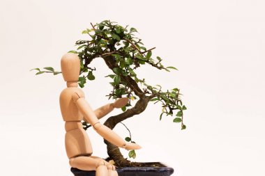love bonsai with puppet