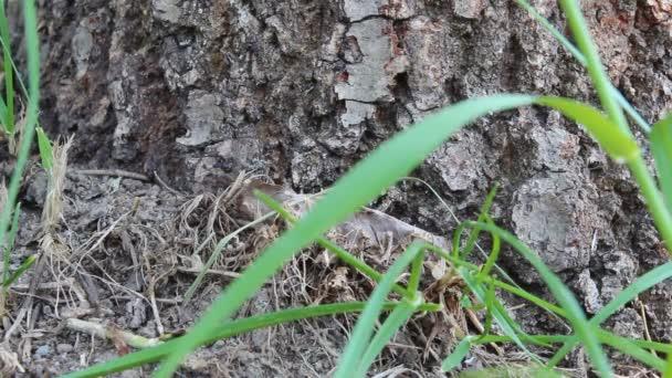 Kolonie mravenců a zelených listech vedle stromu