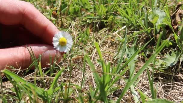 Daisy se otáčí mezi prsty